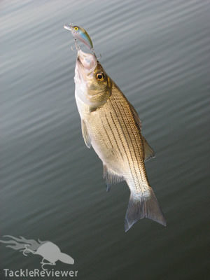 Even the striped bass wanted some.