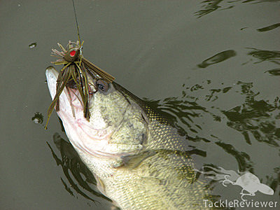 largemouth bass caught on jig